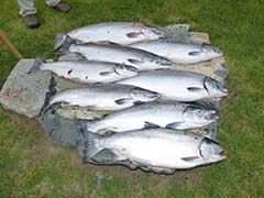 Kenai River, Silver Salmon Fishing